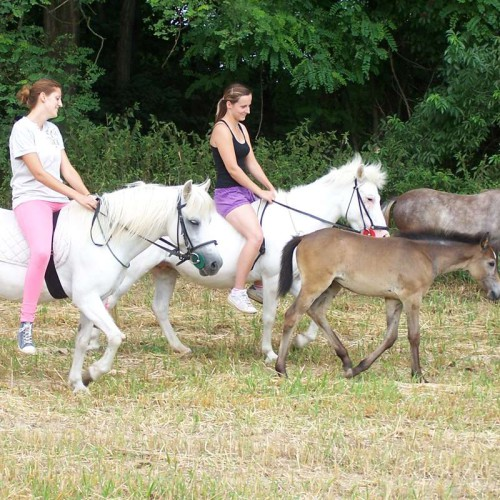 Vyjížďky na koních 04