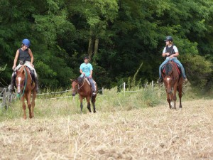Vyjížďky na koních 06