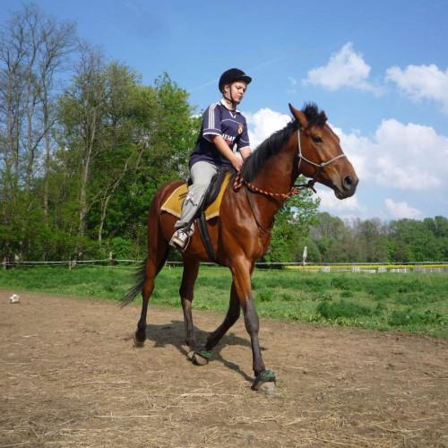Vyjížďky na koních 05